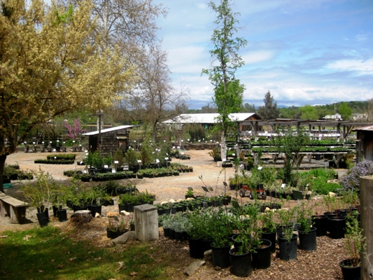 Intermountain Nursery, Prather, CA