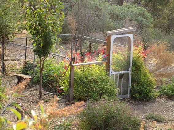 The garden in November 2014