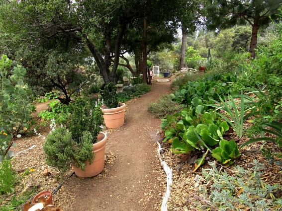 Yesterday, I was raking all the paths, amazing what that little will do to spiff up the garden...