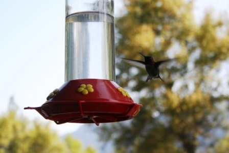 Glass, large capacity hummingbird feeder