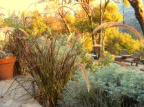 Purple fountain grass and Artemisia