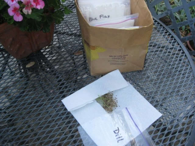 Collect seeds and place in paper towel packet.