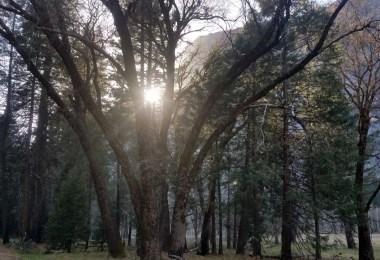 Yosemite Valley Sunset through the Trees