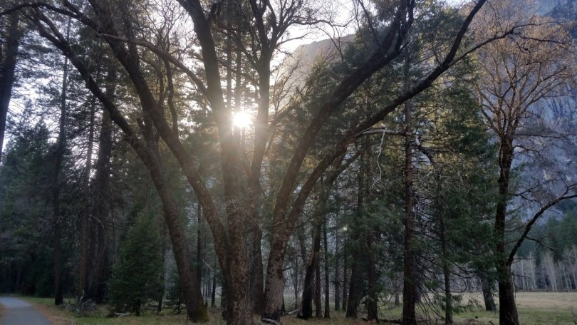 Yosemite Valley Sunset through the Trees