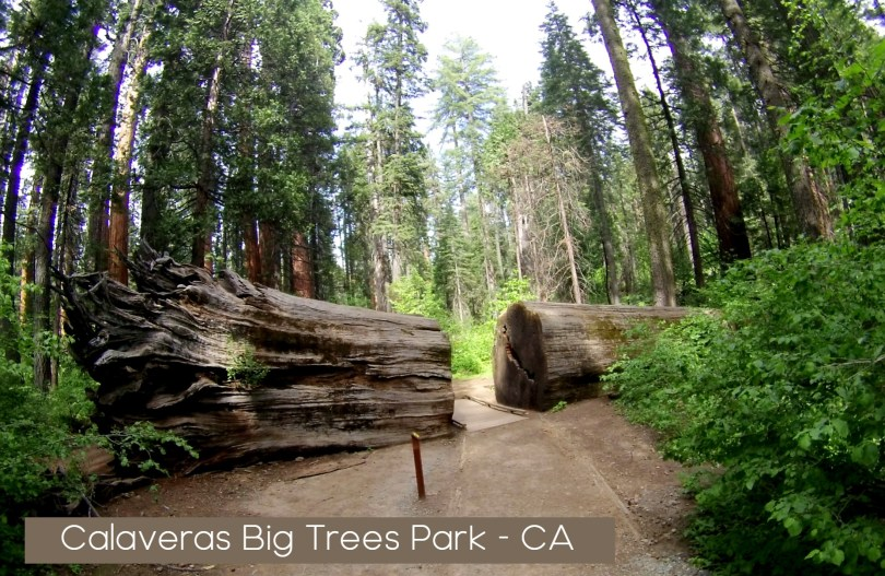Calaveras Big trees park ca Trail