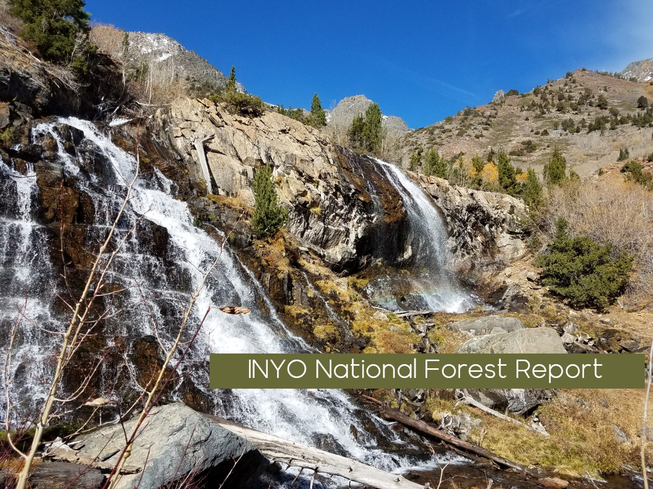 Inyo National Forest Lundy Canyon