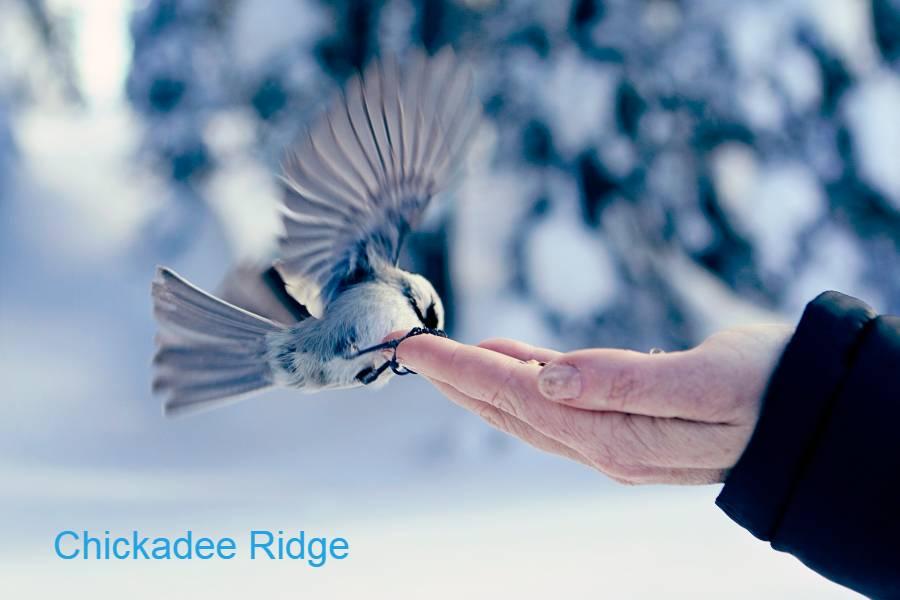 chickadee ridge