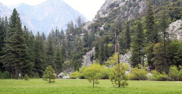 NPS Zumwalt Meadow