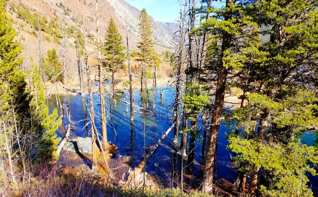 Lundy-beaver-Pond