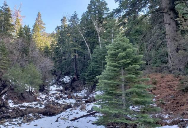 christmas tree humboldt toiyabe