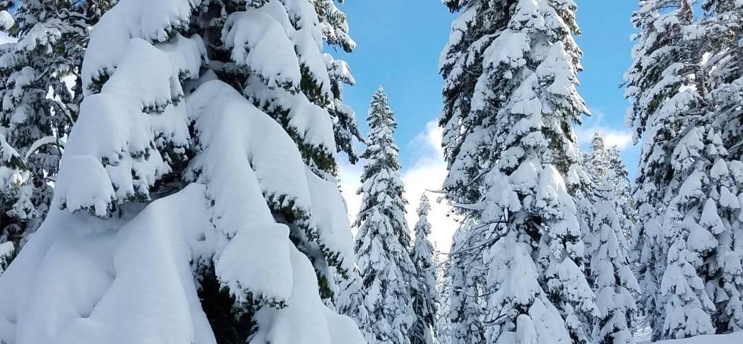 Lake tahoe Snow trees