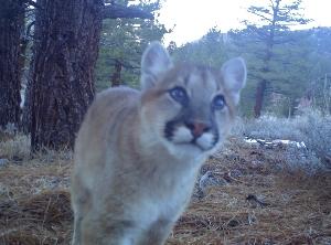 Photos - Eastern Sierra Land Trust