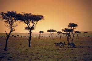 5 Tropical Savanna Fun Facts!   Biomes, Biomes, Biomes