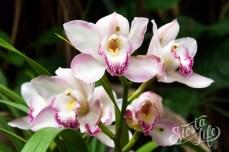 Лоро-парк: орхидеи