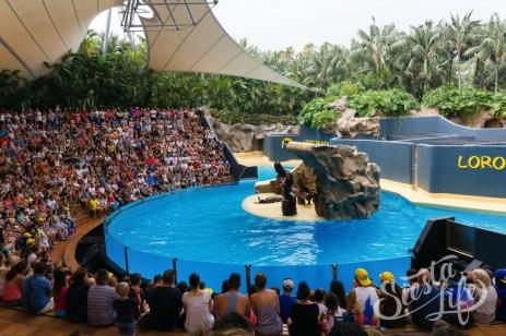 Выступление морских котиков в Лоро-парке