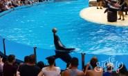 Лоро-парк — морской котик с мячом