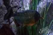Лоро-парк: рыба в аквариуме