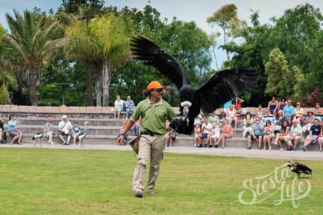 Шоу орлов в Jungle park на Тенерифе