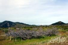 Заброшенный виноградник в горах Тенерифе