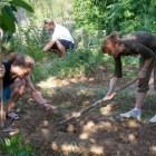 Média o Piešťanskej komunitnej záhrade