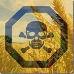 """Vedci tvrdia: """"Zhodný názor o bezpečnosti GMO potravín neexistuje."""""""