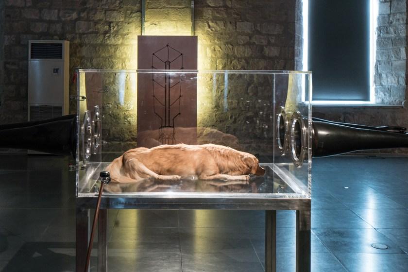 """""""San Guinefort"""", obra de Hernández-Díez con un perro disecado en su interior"""