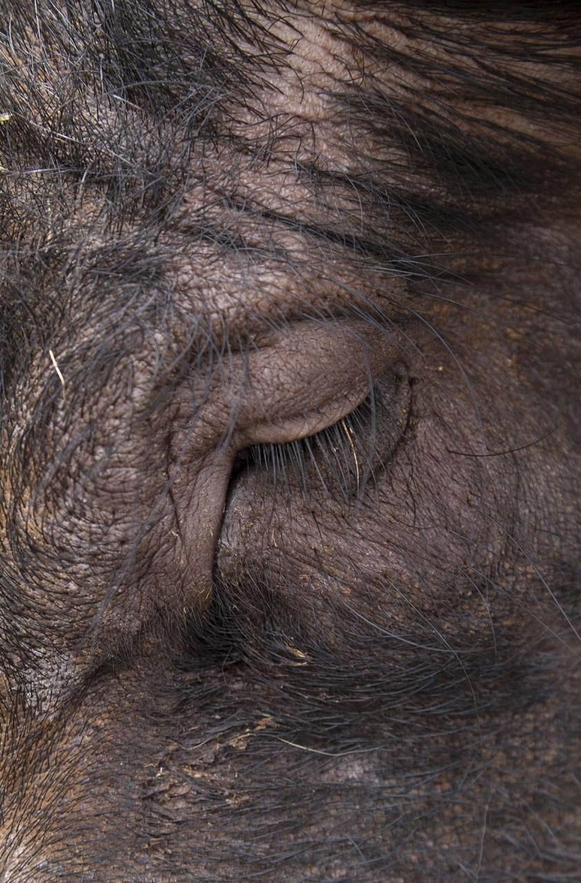 """""""Cosmos"""", fotografía de Ruth Montiel Arias (""""Animalista"""")"""