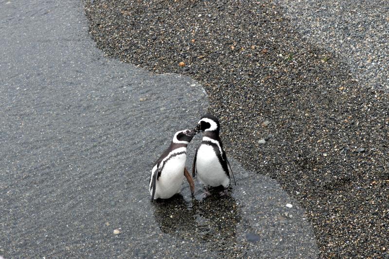 Siga na Viagem - Passeio pelo Canal de Beagle em Ushuaia - Pinguins da Ilha Martillo.