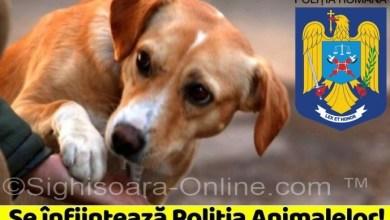 Photo of Se înființează Poliția Animalelor în România!