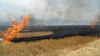 Photo of APIA: Fermierii care ard miriştile riscă reducerea subvenţiilor sau chiar excluderea de la plată