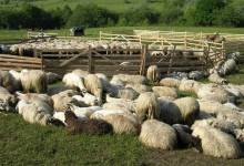 Photo of MURES: Fiul unui cioban sustine ca tatal sau i-a facut cadou 4,5 milioane de euro