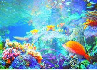 江ノ島水族館ー3