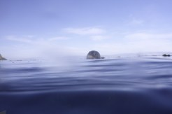 channel islands snorkel 4