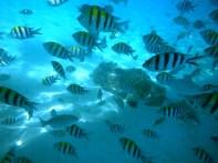 Redang: Here fishy fishy fishy