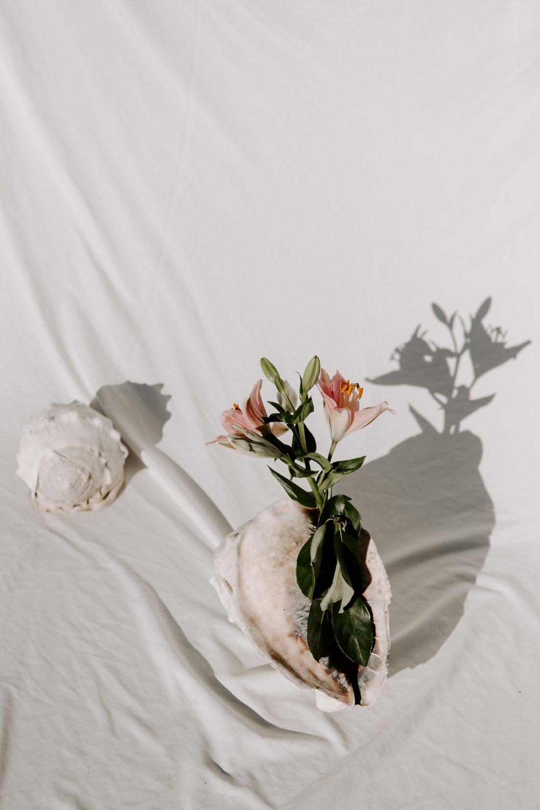 still life seashell flowers natural light fine art pink white