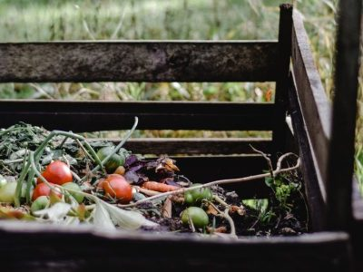 red and green fruits on brown wooden bench