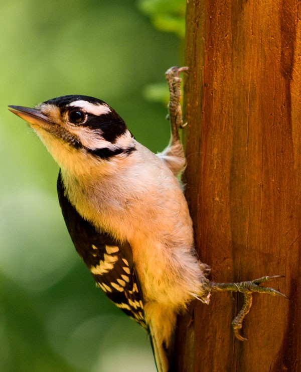 Symbolic Meaning Of The Woodpecker On Whats Your Sign