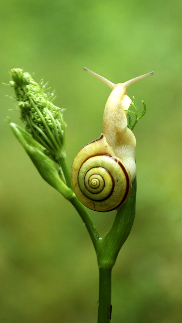 Symbolic Snail Meaning and Understanding Snails on Whats