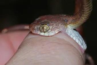 que-significa-soñar-picadura-serpiente