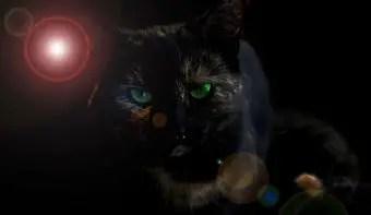 que-significa-sonar-con-gato-negro