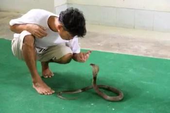 significa-sonar-con-serpiente-como-mascota