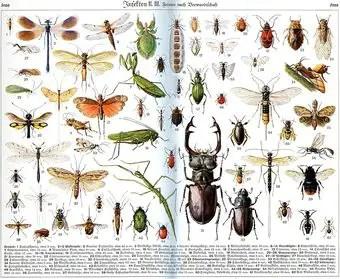 que-significa-sonar-con-insectos