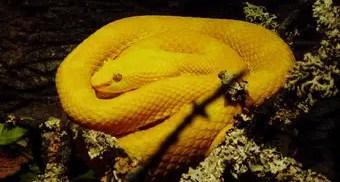 que-significa-sonar-con-serpiente-color-amarilla