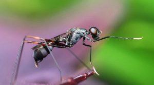 ▷ Formigas Significado Espiritual (Tudo O'que Você Precisa Saber)