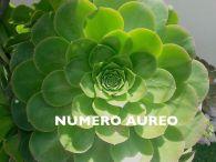 numero-de-oro
