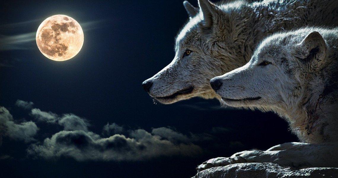 Significado de Soñar con un Hombre Lobo