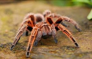 ¿Que significa soñar con Arañas?