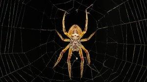 ¿Que significa soñar con Picadura de Araña?