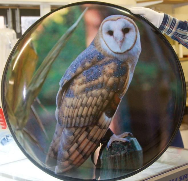 Barn Owl Wheel Cover