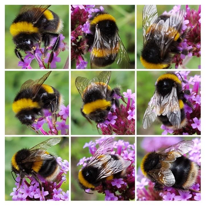 Bee Collage.jpg